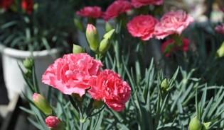 하일꽃농원(단체)